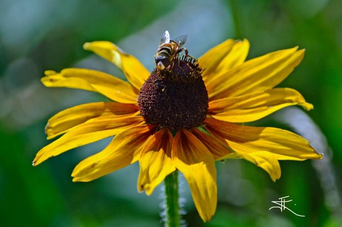 Bee1 si