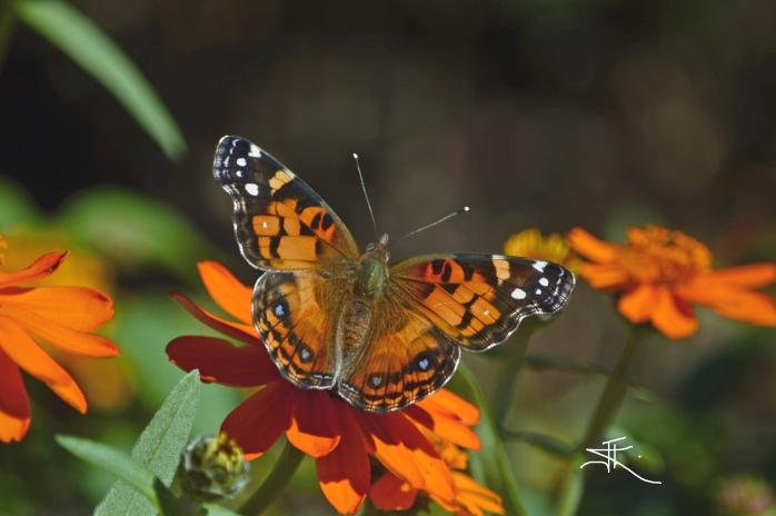 Monarch1 si
