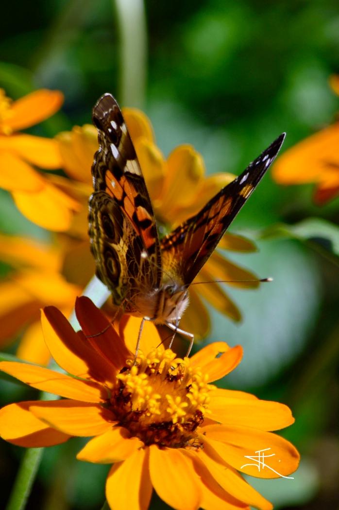 Monarch2 si