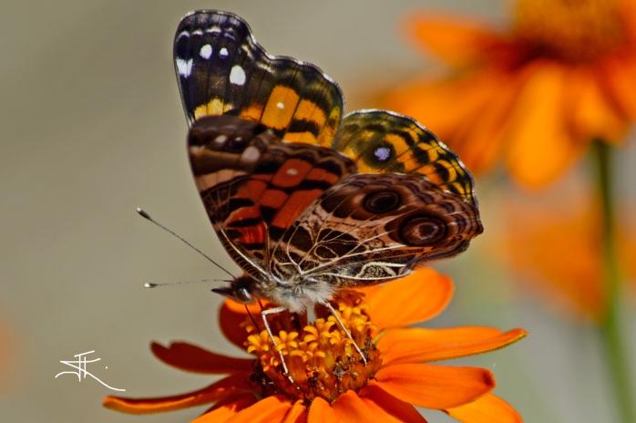 Monarch3 si